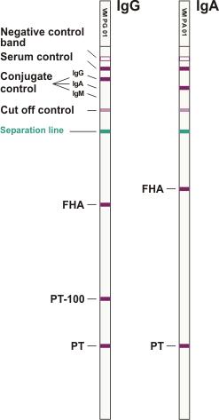 B.pertussis ViraStripe IgG IgA en