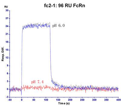 FcRn-FCM