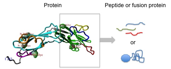 antigen modeling
